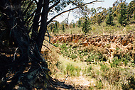 Image Ref: CA726<br />