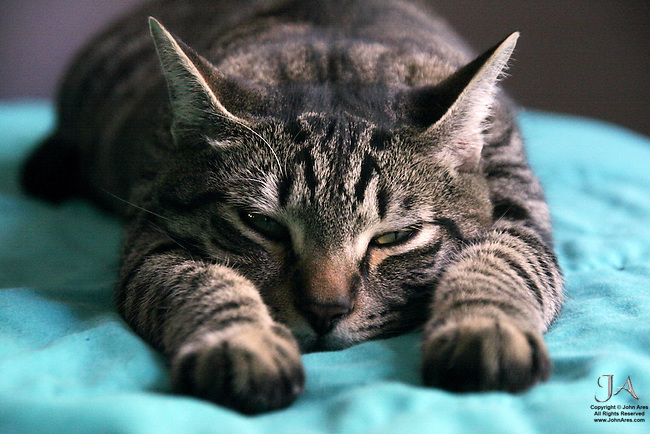 Cat with paws outstretched, ready for a nap
