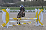 10/04/2016 - Class 7 - British Showjumping Juniors - Brook Farm Training Centre