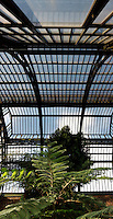 Plant History Glasshouse (formerly the Australian Glasshouse), 1830s, Charles Rohault de Fleury, Jardin des Plantes, Museum National d'Histoire Naturelle, Paris, France. Panoramic view from below, showing the glass and iron roof structure with a cyathea australis lit by the afternoon light.