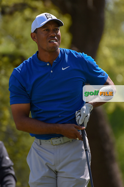 Tiger Woods (USA) watches his tee shot on 12 during day 1 of the WGC Dell Match Play, at the Austin Country Club, Austin, Texas, USA. 3/27/2019.<br /> Picture: Golffile | Ken Murray<br /> <br /> <br /> All photo usage must carry mandatory copyright credit (© Golffile | Ken Murray)