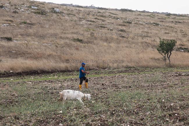 Gaetano è un pastore di Altamura. Ogni mattina esce con le sue 220 pecore per rientrare nel tardo pomeriggio. I suoi pascoli si trovano ad una ventina di chilometri da Altamura in pieno Parco dell'Alta Murgia. Un tempo terreno agricolo e di pastori la Murgia ha conosciuto negli ultimi decenni un processo di dissodamento e distruzione. Un abbandono dovuto anche alle numerose industrie, molti i mobilifici, che richiamavano contadini e pastori.