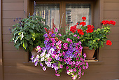 Switzerland. Typical colourful flowers in window box.