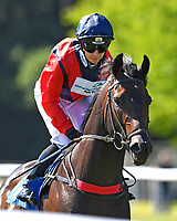 Power of Darkness ridden by Hayley Turner goes down to the start of The Molson Coors Handicap (Class 2) during Whitsbury Manor Stud Bibury Cup Day Racing at Salisbury Racecourse on 27th June 2018
