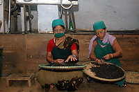 INDIA (West Bengal - Darjeeling) June 2007, Women sorting tea manually at the tea sorting room.  Makaibari produces the most expensive tea in the world. They produce the tea organically (without using any fertilizers or spraying pesticides)through permaculture.  Makaibari is situated at the misty foot hills of Darjeeling Himalayas - Arindam Mukherjee