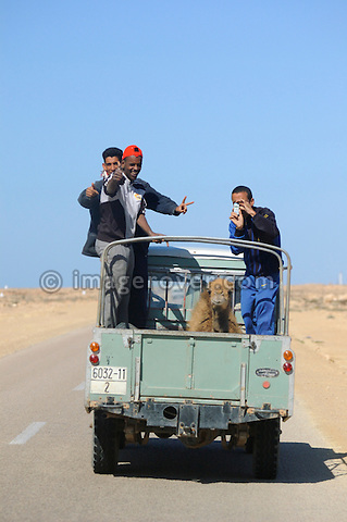 Africa, Morocco, Western Sahara, nr. Laayoune. Photographer photographing the photographer with a mobile phone camera. A camel being transported by a Land Rover Santana Pick Up. --- No releases available. Automotive trademarks are the property of the trademark holder, authorization may be needed for some uses. --- Info: From the mid 1950's untill the early 1990's the english Land Rover was also built under license in Spain. The spanish company Metalurgica de Santa Ana (later to become Santana Motor SA), was producing Land Rovers in the beginning from CKD kits, but local content was gradually increased until the Santanas (this is how they were called) were 100 per cent locally manufactured.