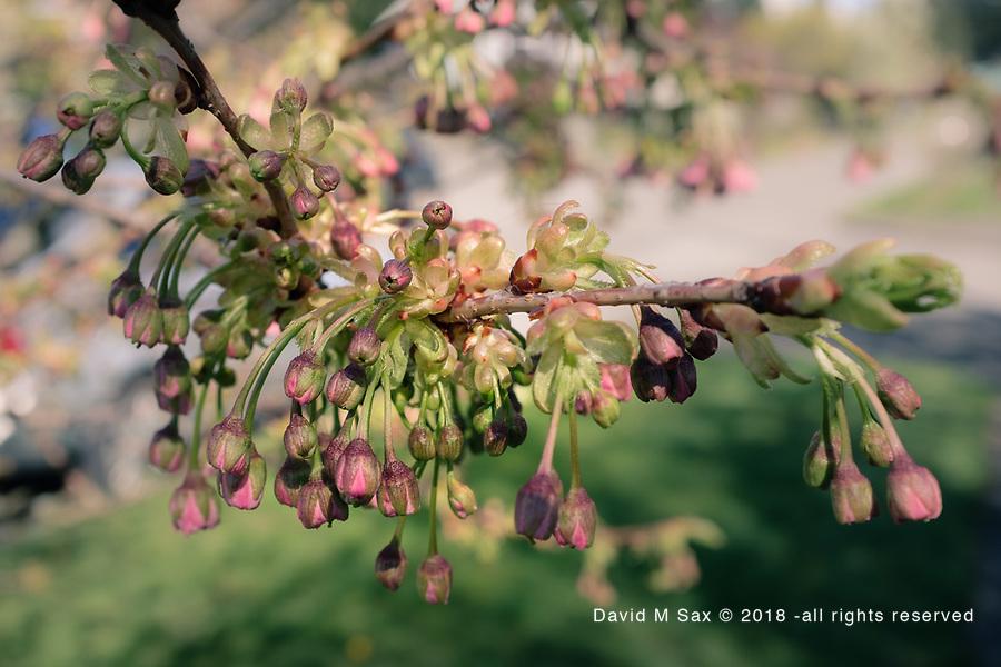 4.15.17 - Blooming...