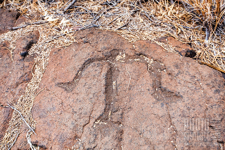 Hawaiian petroglyph or ki'i pohaku at Puako Petroglyph Park, Big Island.