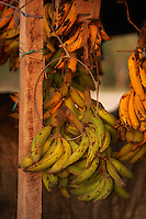 Bananas in market, Belize