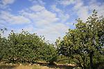 Israel, Upper Galilee. Location of Hurbat Beth Uriah by Meelia-Manot scenic road