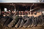 Afin de diversifier son exploitation, catherine eleve des salers, une race bovine connue pour sa viande.                              Catherine Kervran, agricultrice de 35 ans, à Plourin lès morlaix, est à la tête d'une exploitation laitière familiale d'une soixante de vaches laitière, .  Ces journees commencent a 7 heures du matin par une premiere traite. La journee elle se consacre à l'entretien de son exploitation et des animaux. Une deuxieme traite a lieu à 18 heures.                                             Agricultrice depuis la troisième generation, elle dirige son exploitation avec sa mere. Son père à la retraite vient lui donner de l'aide régulièrement. Les autres jours de la semaine un employé agricole travaille à mi temps sur l'exploitation.                                                                Catherine Kervran est à l'origine de la création du collectif des agricultrices en coleres, qui regroupe plus d'une centaine d'exploitante de toute la bretagne.                                                                    La commune de Plourin-les-Morlaix regroupe 36 exploitations, principalement en production laitière. La production se situe à 11 millions de litres, ce qui fait de cette commune en 2ème en terme de production laitiere---- INFO A CONFIRMER.