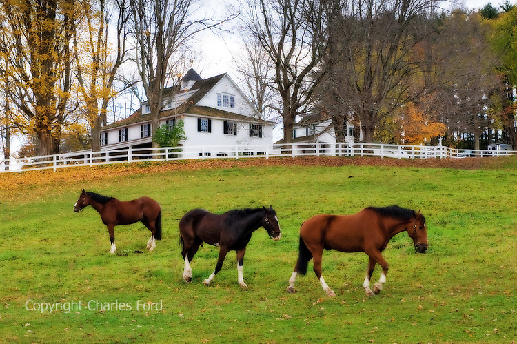 Horses in front of New England farmhouse.