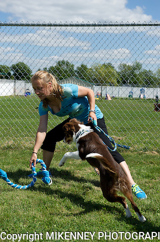 Fido Festival held August 24, 2013 at Boomtowne Canine campus in Farmington NY