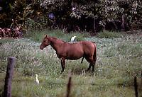 Molokai, 1995