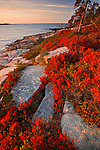Coastline on the Schoodic Peninsula, Acadia National Park, Maine, USA