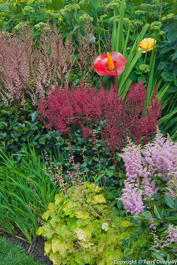 Vashon-Maury Island, WA<br /> Driscoll garden, colorful composition detail with astilbe, hydrangea and glass garden art