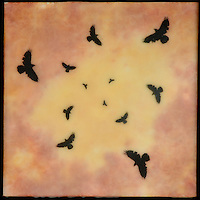 Encaustic painting with photo transfer of murder of crows in sunset orange sky
