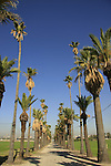 Israel, Southern Coastal plain. Palm trees in Mikveh Israel