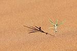 Tiny green desert plant in sand.