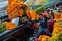 A Mexican flower market vendor carries a bunch of marigold flowers (Flor de muertos) for Day of the Dead celebrations in Mexico City, Mexico, 31 October 2016. Marigold flowers (Cempasúchil) are used to adorn graves and altars during the Day of the Dead (Día de Muertos). A syncretic religious holiday, combining the death veneration rituals of the ancient Aztec culture with the Catholic practice, is celebrated throughout all Mexico. Based on the belief that the souls of the departed may come back to this world on that day, people gather at the gravesites in cemeteries, praying, drinking and playing music, to joyfully remember friends or family members who have died and to support their souls on the spiritual journey.