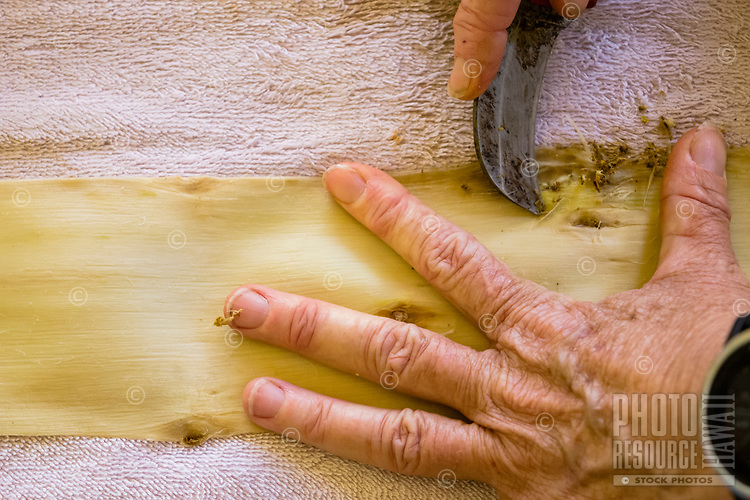 Kapa making on the Big Island: A woman removes bits of bark from wauke (paper mulberry) after soaking it in fresh water to prepare it for beating into kapa.