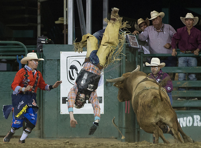 Cullen Telfer falls in the Bull Riding event during the Reno Rodeo on Sunday, June 23, 2019.
