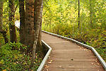 Idaho, Coeur d'Alene. Nature trail at Blackwell Park in summer.
