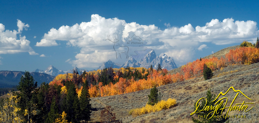 a panoply of fall colors on the hills east of the Grand Tetons by Grand Teton National Park in the Bridger Teton National Forest outside of Jackson Wyoming.<br />