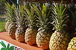 Fresh pineapples in the sun, lined up on a shelf.