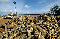 CAMBODIA, Mekong region, Kratie, logging of forest, loading the timber on Mekong river boats