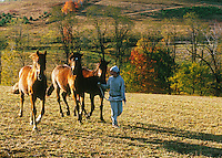 Teen girl walking three horses through paddock in early morning light.