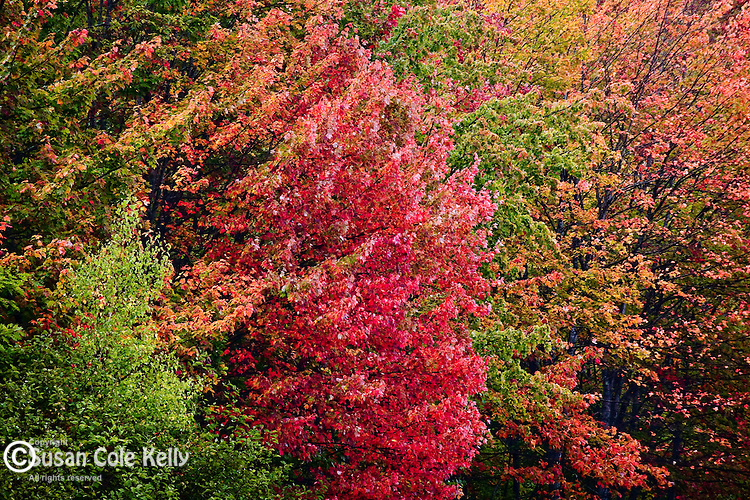 Fall foliage in Downeast ME