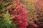 Fall foliage in Downeast ME