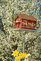 Handmade red barn birdhouse painted as a tabacco barn or roadside stand in a tree of blooming pear in spring