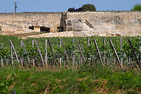 The vineyard and entrance to the winecellar in an old stone quarry of Chateau Ausone Saint Emilion Bordeaux Gironde Aquitaine France