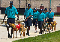 Action from the dog races at Daytona Beach Kennel Club, Daytona beach, FL, March 2010.  (Photo by Brian Cleary/www.bcpix.com)