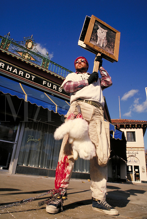 Male (30 years old) animal rights activist demonstrates in front of a fur store on public sidewalk, men, man, protesting, protester, animal rights; MR#999; restrictions may be waived--contact photographer.