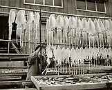 JAPAN, Kyushu, mature woman hanging squid to dry at a fish market, Yobuko (B&W)