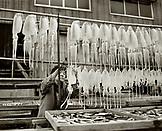 JAPAN, Kyushu, mature woman hanging squid to dry at a fish market, Yobuko (B&W)