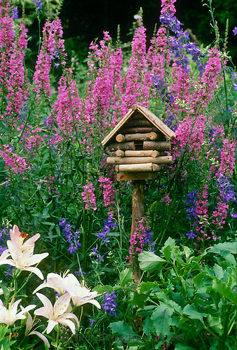 Fanciful log cabin birdhouse in blooming summer garden of morning glories, and gaudy flowers, Missouri USA