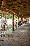 MEXICO, San Pancho, San Francisco, La Patrona Polo Club, several horses stand amongst the stables