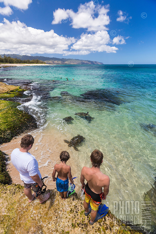 Kids watch green sea turtles or honu on the North Shore of O'ahu.