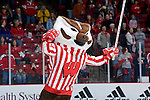 MADISON, WI - JANUARY 26: Mascot Bucky Badger of the Wisconsin Badgers skates on the ice prior to the game against the St. Cloud State Huskies at the Kohl Center on January 26, 2008 in Madison, Wisconsin. Wisconsin beat St. Cloud State 4-0. (Photo by David Stluka)
