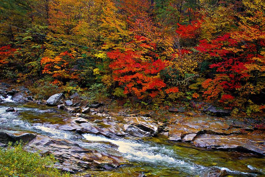 Fall foliage, Mt. Odeasan National Park, South Korea