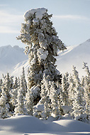 Matanuska Area, Alaska, U.S.A, January 1989. A sudden cold wave struck Alaska resulting to the temperature falling under 50 degrees Centigrade (58 degrees Fahrenheit).