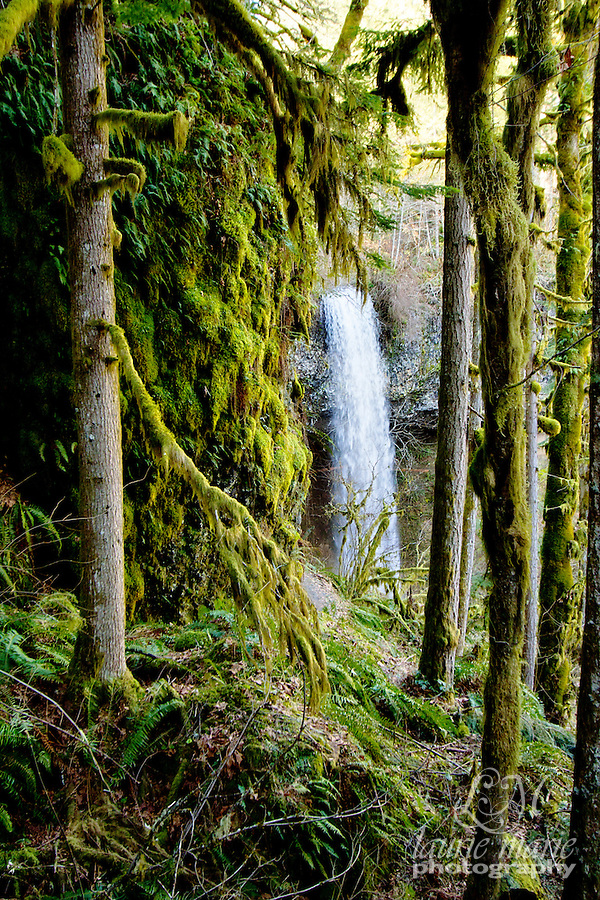Shellburg Falls through the trees