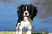 Bob, ANIMALS, REALISTISCHE TIERE, ANIMALES REALISTICOS, dogs, photos+++++,GBLA4316,#a#, EVERYDAY