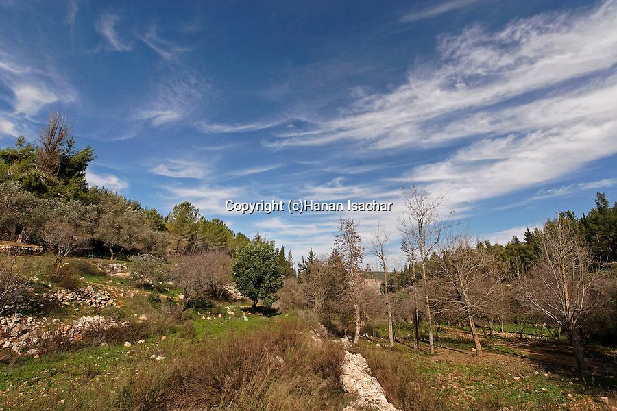 Israel, Jerusalem Mountains. Ein Kobi in Wadi Kobi