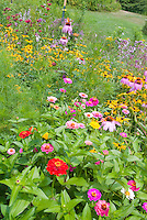 Zinnias, Echinacea, Rudbeckia annuals and perennial flowers for attracting wildlife insects, bees and butterflies