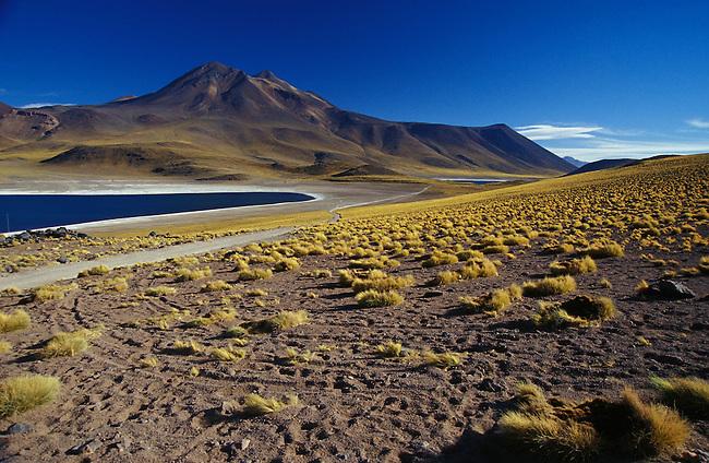 Route entre San Pedro de Atacama et Paso Jama. Vegas de Quepiaco. *** Vegas de Quepiaco between San Pedro de Atacama and Paso Jama, Chile.
